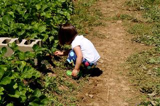 Where to Wednesday: Strawberry Picking