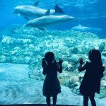 Where to Wednesday: A Special Adventure for Kids Who Love Sea Animals