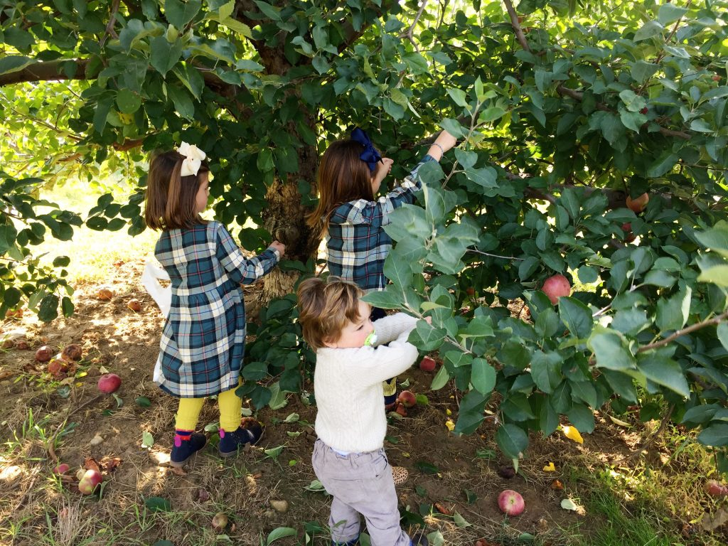 Apple Picking NJ