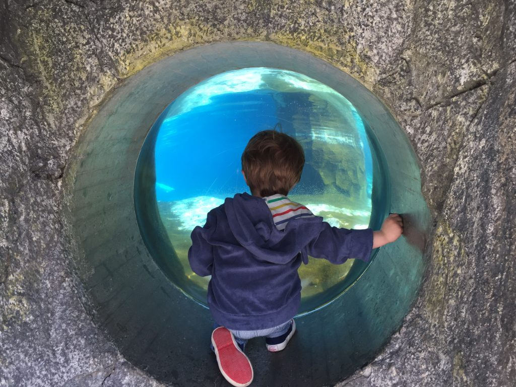 photo relating to Mystic Aquarium Printable Coupons titled Suggestions for Going to the Mystic Aquarium - The Chirping Mothers