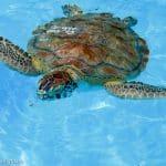 Family Travel: Marathon Turtle Hospital, Florida Keys
