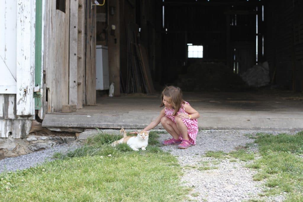 Cat at Verdant View Farm