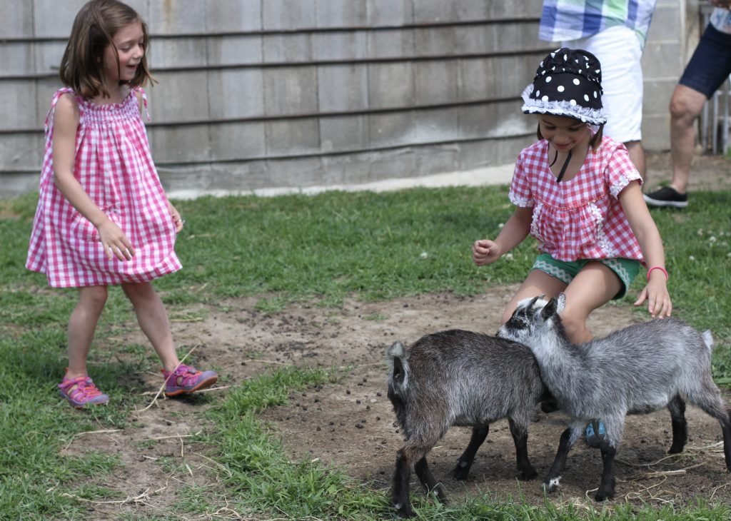 Kids with Baby Goats