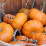 New Jersey Pumpkin Patches